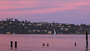 vibrant pink sunset view of tiburon california from the shores of downtown sausalito with a passing sailboat and remnants of an old pier