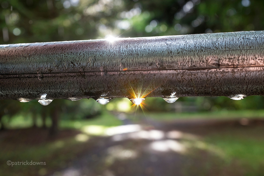 The sun pops out after a rain, and turns raindrops on a fence gate into sparkling jewels.