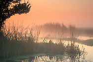 Misty orange fog at sunrise over tule reeds and water, Jones Tract, San Joaquin delta, near Stockton, California