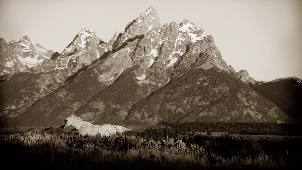 Horses run past the Tetons during Triangle X Ranch's morning roundup.