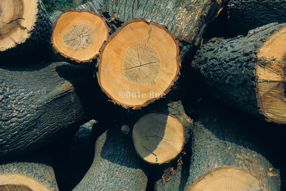 Stack of cut down trees.