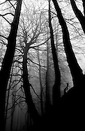 A forest is pictured at the Basque Country. (Ander Gillenea / Bostok Photo)