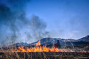 The age old tradition of controlled field burning in Aso, Kumamoto. Asosan volcanic range in the background. The burning results in the most verdant green landscape come summer time.
