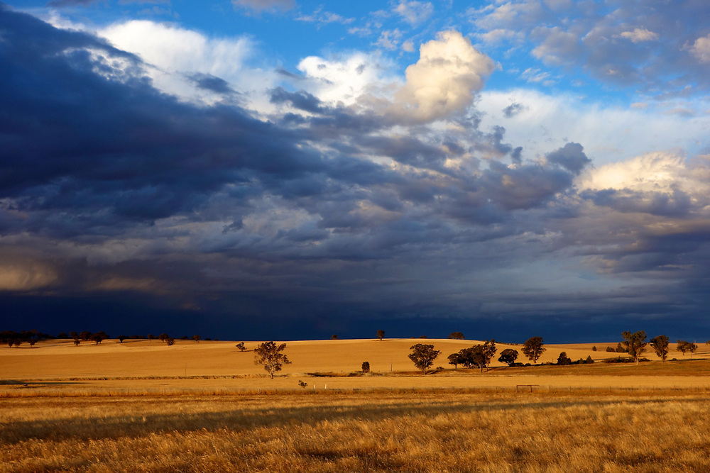 Wheat fields in New south wales, Australia. <br />