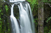 Upper Kentucky Falls Siuslaw National Forest Oregon