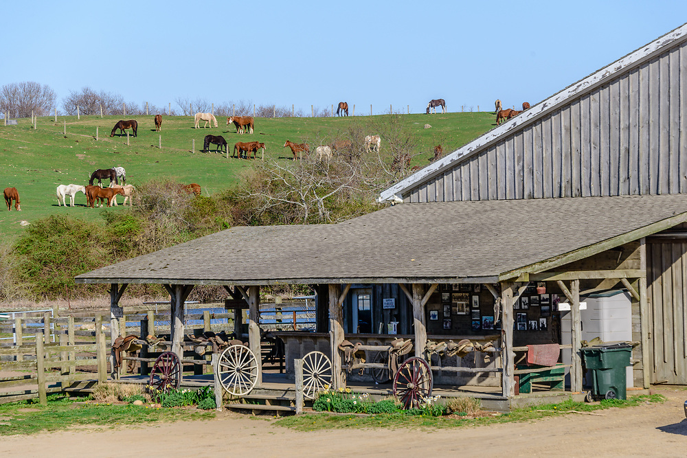 Deep Hollow Ranch, Oldesst working ranch in the United States. Montauk, NY