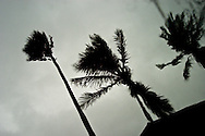 Palm trees are whipped around by tropical storm force winds.