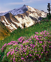 Hidden Lake Peak with meadows of pink mountain heather, North Cascades National Park Washington USA