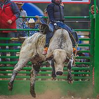 Helmville NRA Rodeo