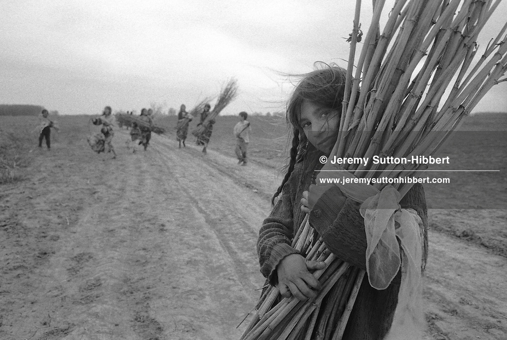 Kalderash gypsy youths collect dried canes for use as beddig for their horses, near the Kalderash Roma camp of Sintesti, near Bucharest. It is common for the youths of the camps to do chores and work within the camp and not to attend school.