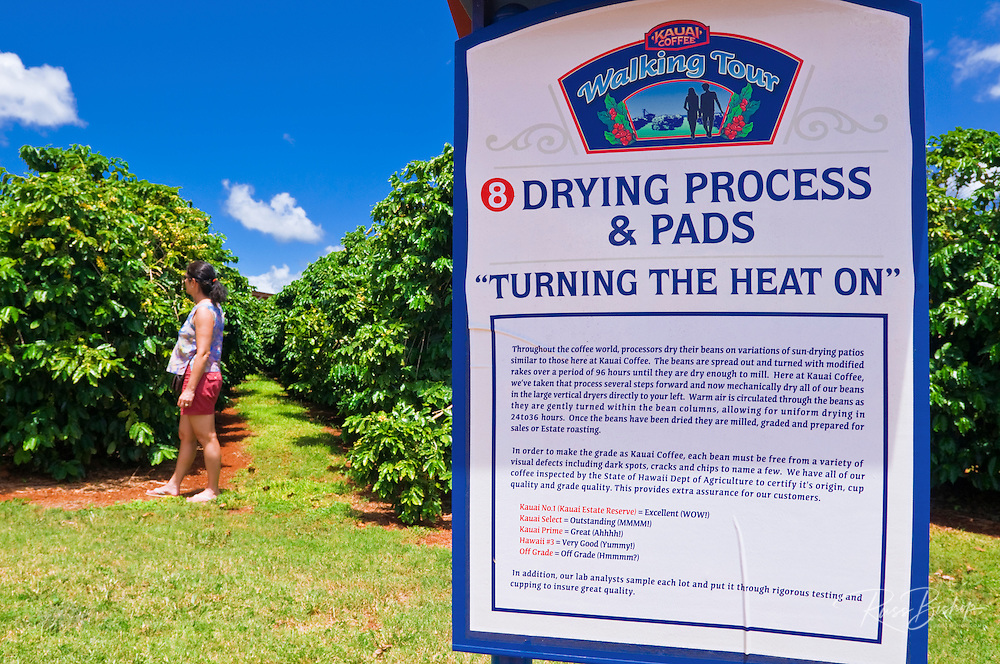 Interpretive sign and coffee trees at the Kauai Coffee Company, Island of Kauai, Hawaii
