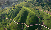 SRI LANKA. Aerial view of Tea