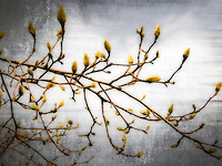 Pussy willow branch abstracts