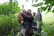 A dog owner carries his Staffordshire Bull Terrier over a countryside stile, on 10th September 2018, near Lingen, Herefordshire, England UK.