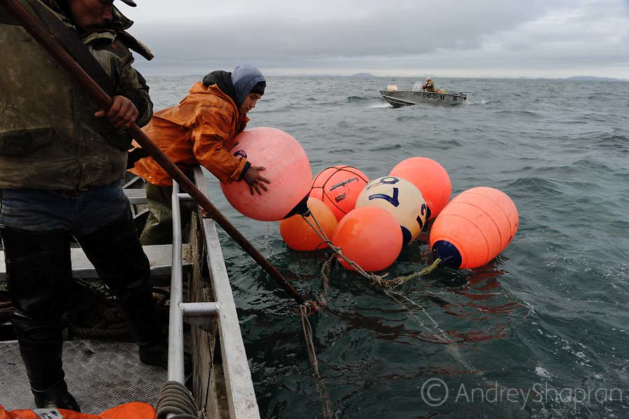 Whale hunting in the Bering sea, Chukotka, Russia