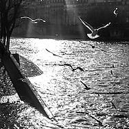 France. paris. 4th district.  the quai  d orleans along the seine river , on saint louis island,  /  le quai d orleans sur  ile saint louis paris