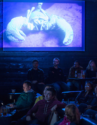 Patrons enjoy a tasty beverage while watching a presentation on insect life at the once-monthly Nerd Nite event, Monday, April 24, 2017, at Club 21 in the Uptown neighborhood of Oakland, Calif. That's a scorpion, seen in ultraviolet light, on the screen. (Photo by D. Ross Cameron)