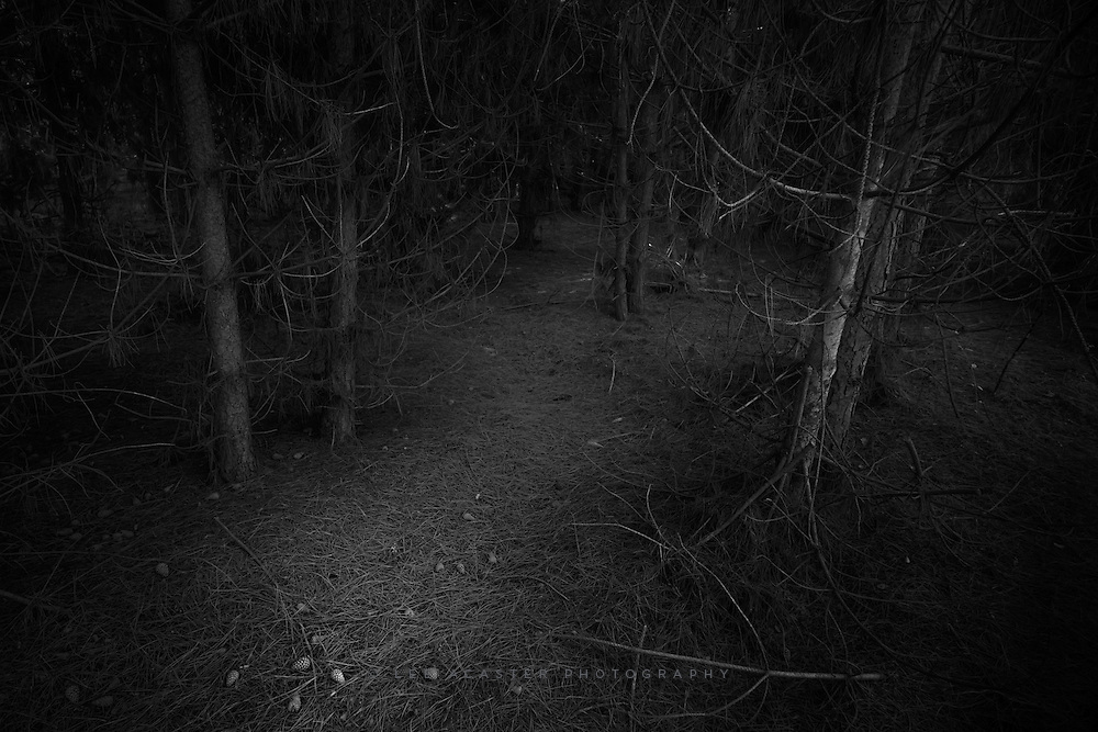 Another from the pine forests at Dunwich, from the dark lifeless forest floor, where the pine needle and lack of light kill off all other life