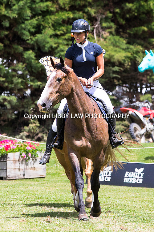 The Wilson Sisters showcase their Kaimanwa Stallions who were in the wild just 6-months ago - Vicki rides with no bridle: 2015 NZL-IMAKE Showjumping Waitemata World Cup - Woodhill Sands (Sunday 11 January) CREDIT: Libby Law/www.photosport.co.nz