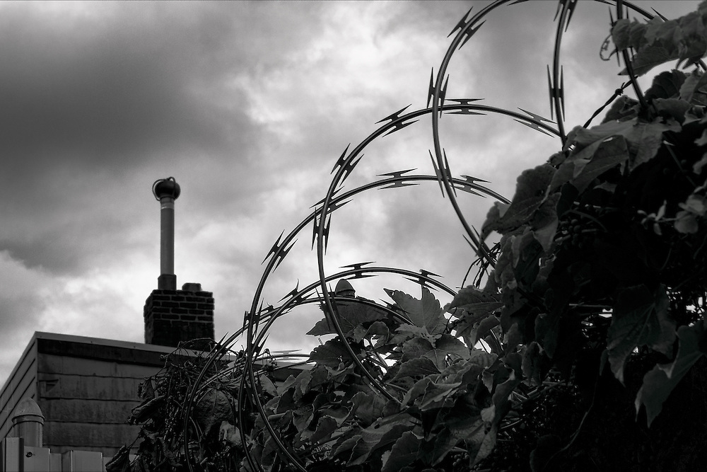 An interesting juxtaposition of razor wire, grape leaves, storm clouds, and an archaic chimney in Queens, New York.