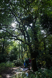 Denham, UK. 11th September, 2020. A tree house installed by tree protectors from HS2 Rebellion in a mature oak tree expected to be felled as part of works connected to the HS2 high-speed rail link. Anti-HS2 activists continue to try to prevent or delay works on the controversial £106bn HS2 high-speed rail link from a series of such protection camps based along the route of the line between London and Birmingham.