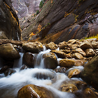Orderville Canyon is a finger of the Narrows in Zion National Park. I recently traveled these ancient coridors and discovered some fall colors.