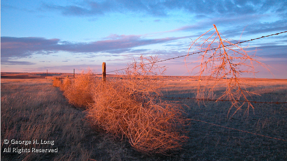 Tumbleweed stuck in barbed wire fence and a big sky sunset over Hill 57 in Great Falls, Montana