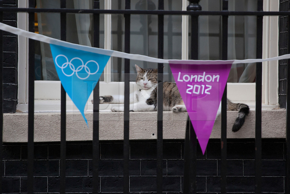 © licensed to London News Pictures. London, UK 25/07/2012. Larry, Downing Street cat relaxing next to a window of No10 in Downing Street. Photo credit: Tolga Akmen/LNP