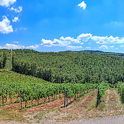 panoramic images of italian vineyards