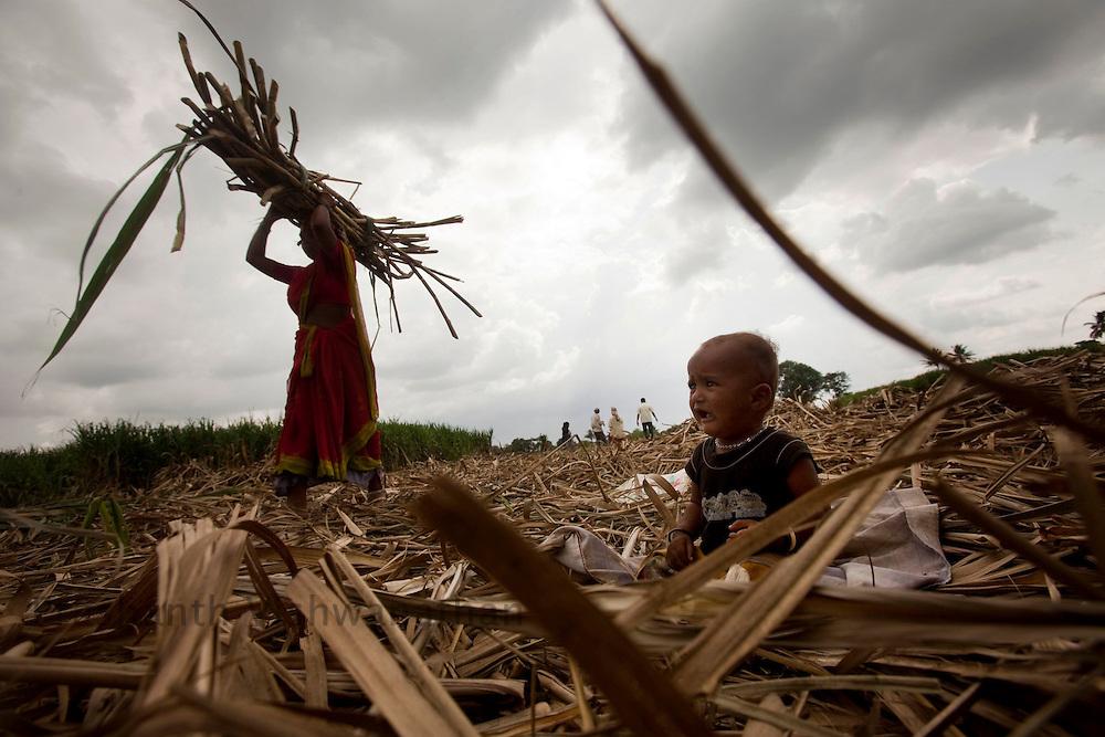 One and half year old Suraj Uttam Purmale cries as his mother Shanta (behind) harvests sugarcane at a sugarcane field in the outskirts of Pune, Maharashtra, India, on Thursday July 9, 2009. Photographer: Prashanth Vishwanathan/NYT