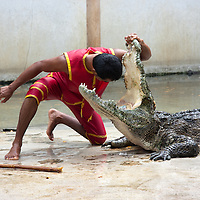 Samut Prakarn Crocodile Farm and Zoo (???????????)