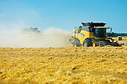 harvesting 2 row barley<br /> near Fairlight<br /> Saskatchewan<br /> Canada