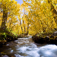 After a decent six miles hike I ducked in the trees to find this beautiful scene of McGee Creek. I've been seeing shots like these and this time the cottonwood leaves were just right.