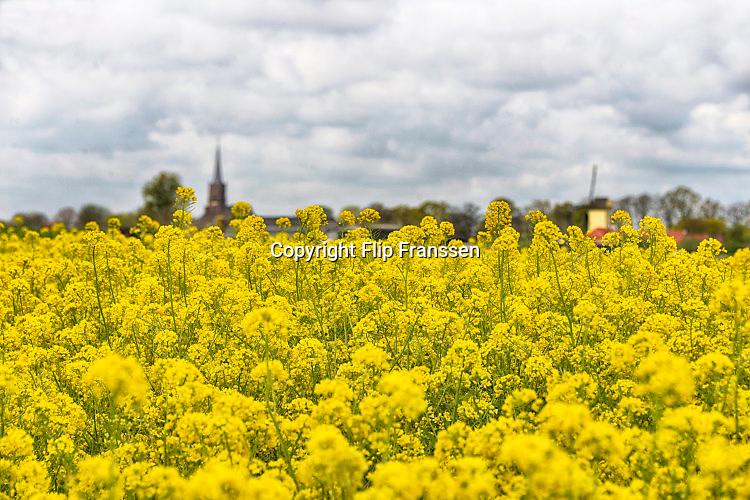 Nederland, the Netherlands, Batenburg, 30-4-2016Veld met bloeiend geel koolzaad . Op de achtergrond het dorp, een officieel stadje, met haar kerk en molen . Doorkomstplaats van de Giro , ronde van ItalieFOTO: FLIP FRANSSEN/ HH
