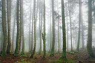 Bosque de Aubàs, Bossost, Valle de Aran
