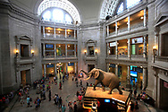 The Rotunda ofd the Smithsonian Institution Museum on Natural History in Washington,DC Photo by Dennis Brack