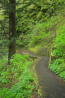 Hiking trail, Columbia River Gorge National Scenic Area, Oregon