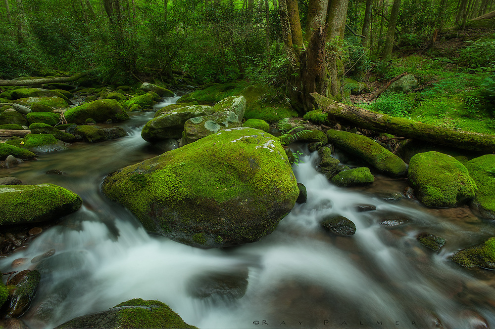 Roaring Fork, Great Smoky Mountains, Tennessee.  Trails connected people in the Smokies, a lifeline between tribes, between homesteads.  It was natural for footpaths to follow water.  On this day I am on one of these tracks, now a road for too many people, that follows benches and contour lines along a totured mountainside.  After bridging several drainages, the road settles on following a stream, the Roaring Fork, crossing and recrossing it through open forest interspersed with patches of dark, impenetrable vegetation. Whenever I can, I leave the parade of automobiles and follow the stream, exploring along the banks as far as I can before it disappears into thick banks of rhodendondron, or plunges into canyons too deep to follow.  It is after all, just another passageway. I push through understory and come to rest in this small universe.   Moss blankets everything.  It is a carpet spread on the forest floor, it is sylvan sleeves, it is jade on sandstone.  It is a coat against the snow and wind, a sponge against the floods, a coolness against the hot day. And in the middle is a centerpiece, my anchor, a star and her planets, with the milky way flowing around her.  She shines in beauty, and yet I know that this heaven is not always so tranquil.  When I have soaked it all in, I wonder if I should move on.  But still I stand on the edge of the orbit, wishing to be let in, wishing I was as simple as moss, thinking:  I will cover you.