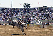 Saddle Bronc, Bucking horse, Salinas Rodeo, Rodeo, Salinas, California