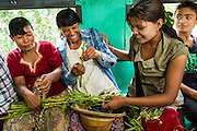 15 JUNE 2013 - YANGON, MYANMAR:  Market vendors prepare vegetables to sell when they get to the market while they ride the Yangon Circular Train. Yangon Circular Railway is the local commuter rail network that serves the Yangon metropolitan area. Operated by Myanmar Railways, the 45.9-kilometre (28.5mi) 39-station loop system connects satellite towns and suburban areas to the city. The railway has about 200 coaches, runs 20 times and sells 100,000 to 150,000 tickets daily. The loop, which takes about three hours to complete, is a popular for tourists to see a cross section of life in Yangon. The trains from 3:45 am to 10:15 pm daily. The cost of a ticket for a distance of 15 miles is ten kyats (~nine US cents), and that for over 15 miles is twenty kyats (~18 US cents). Foreigners pay 1 USD (Kyat not accepted), regardless of the length of the journey.     PHOTO BY JACK KURTZ