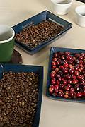 Coffe taste, Finca Lerida Coffe Estate, Boquete,Chiriqui province,Panama,Central America