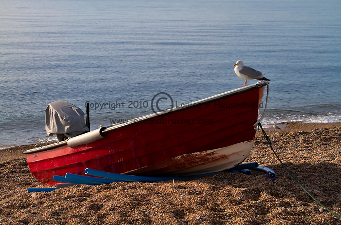 Herring Gull on a beached dinghy at Beesands, South Hams, Devon.