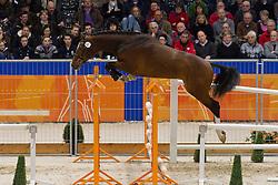 057 - Eliot<br /> KWPN Hengstenkeuring - 's Hertogenbosch 2012<br /> © Dirk Caremans
