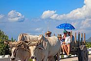 Sabalo, Pinar del Rio, Cuba.
