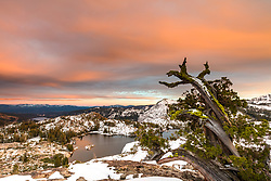"""Lake Angela Sunset 2"" - Photograph of a bright pink sunset and an old tree above Lake Angela. Donner Lake and Truckee can be seen in the distance."