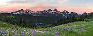 Late Summer wildflowers and the Tatoosh Range from Paradise in Mount Rainier National Park, Washington State, USA