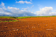 Sugar cane fields and red earth at the Robinson Plantation, Island of Kauai, Hawaii