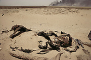 A dead Iraqi soldier surrounded by unexploded landmines in the Manageesh Oil Fields in Kuwait near the Saudi border. Huge amounts of munitions were abandoned in Kuwait by retreating Iraqi troops in February, 1991. Also, nearly a million land mines were deployed on the beaches and along the Saudi and Iraqi border. In addition, tens of thousands of unexploded bomblets (from cluster bombs dropped by Allied aircraft) littered the desert. More than 700 wells were set ablaze by retreating Iraqi troops creating the largest man-made environmental disaster in history.