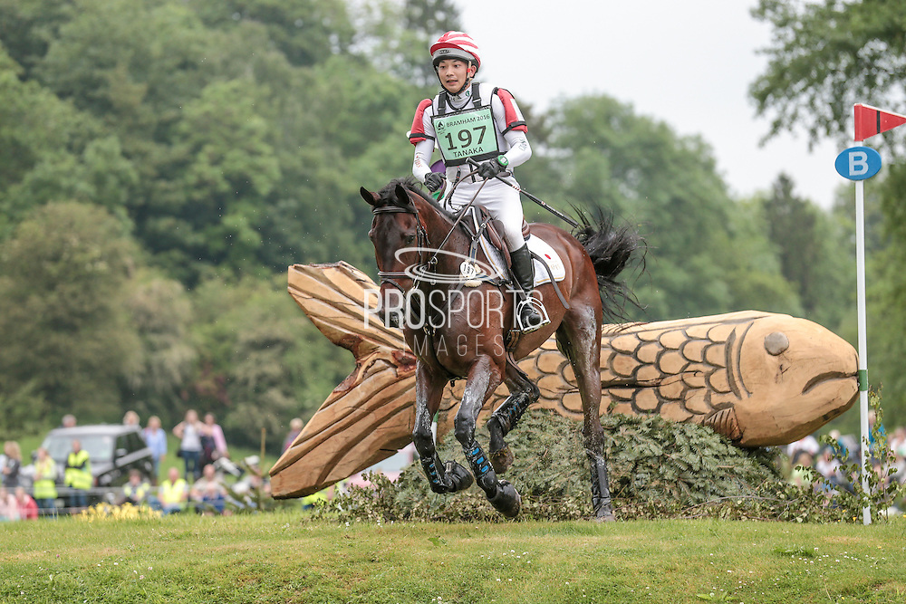 KELCYN PIRATE ridden by Toshiyuki Tanaka (Japan) at Bramham International Horse Trials 2016 at  at Bramham Park, Bramham, United Kingdom on 11 June 2016. Photo by Mark P Doherty.
