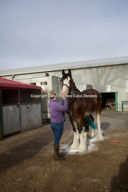 Shire Horse Society Spring Show 2017  Sights and  people around the showground